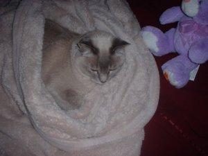 Nylablue & Fuzzy bunny 2010